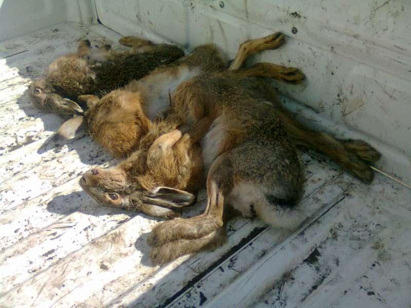caza furtiva